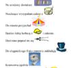 Zdania z obrazkami – głoska [c] w nagłosie