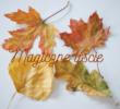 Magiczne liście – ćwiczenie oddechowe